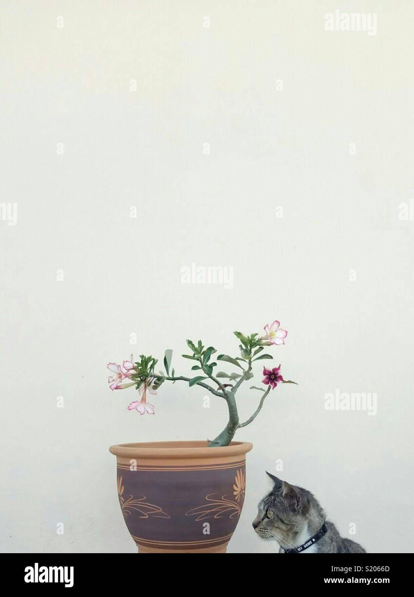 Tomado de Meizu M3 nota Imagen De Stock