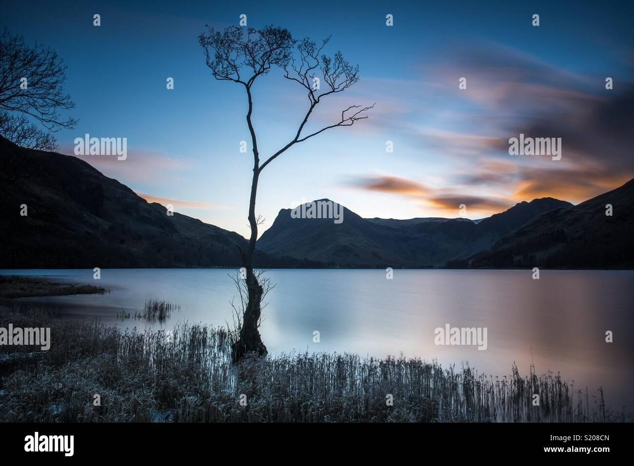 Lone Tree en Buttermere en el distrito inglés de Lake District. Imagen De Stock