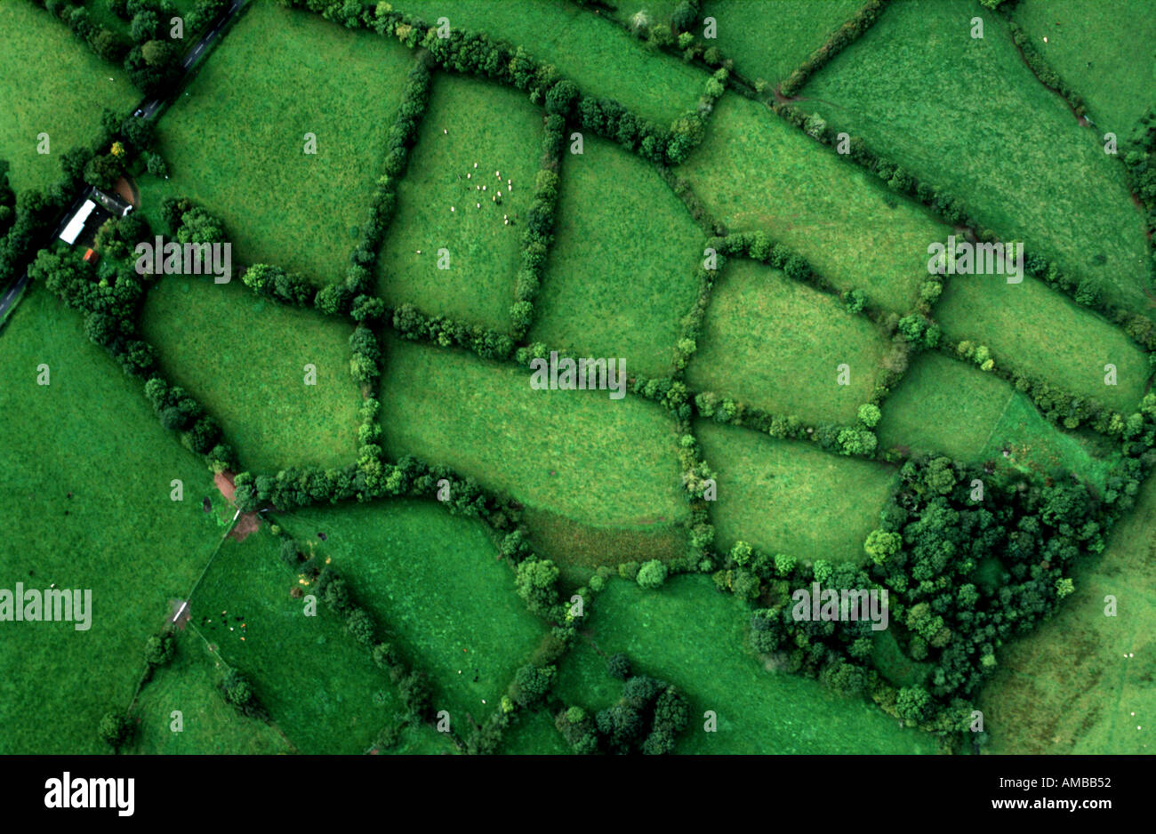 Des champs verts de l'Irlande Photo Stock