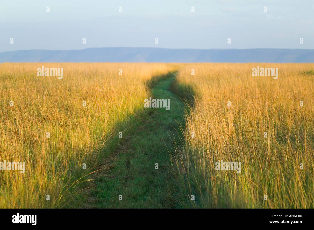 Chemin parmi les hautes herbes de la savane, Masai Mara, Kenya Photo Stock