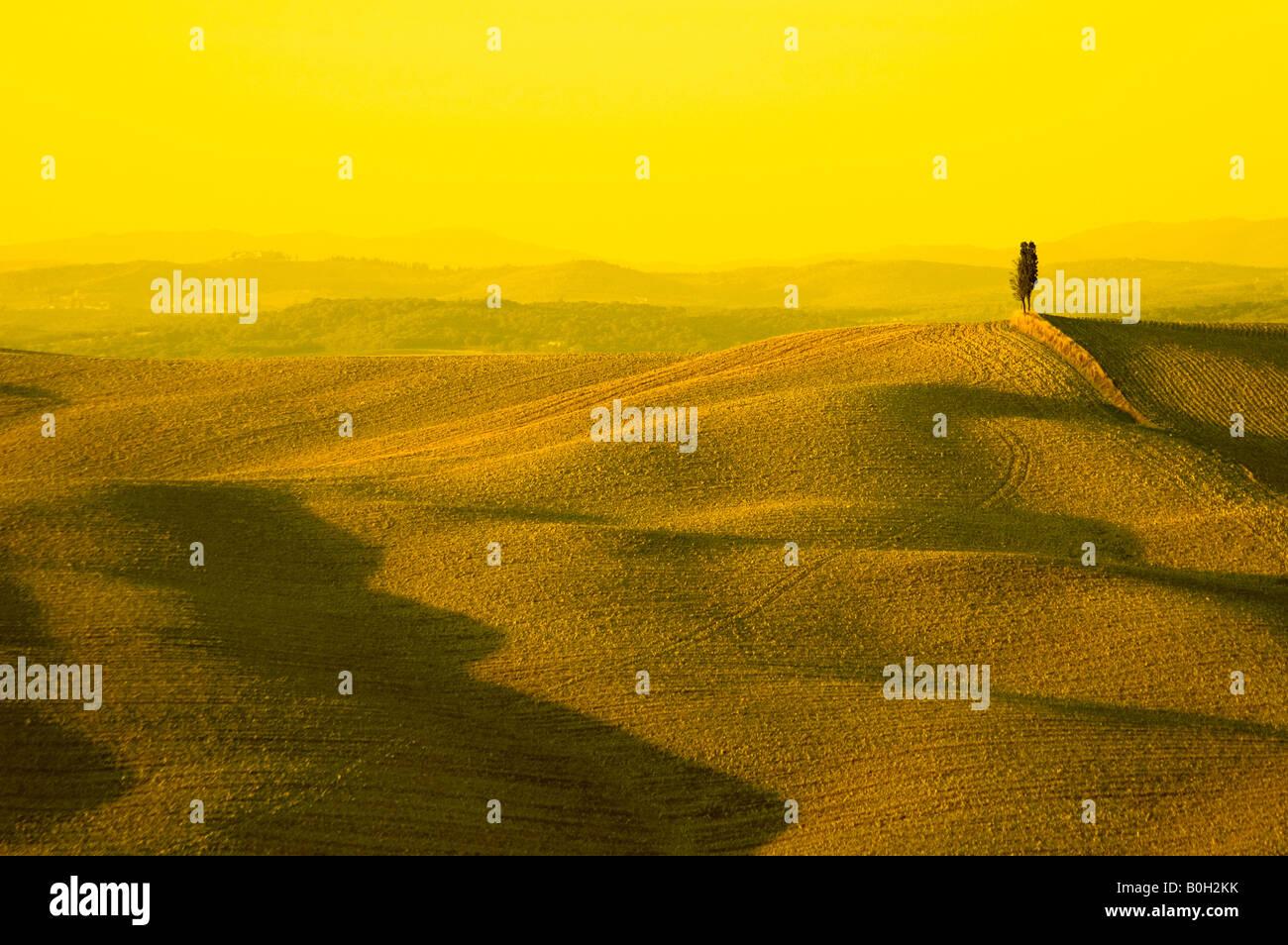 Cyprès solitaires dans hill paysage typiquement toscan Photo Stock