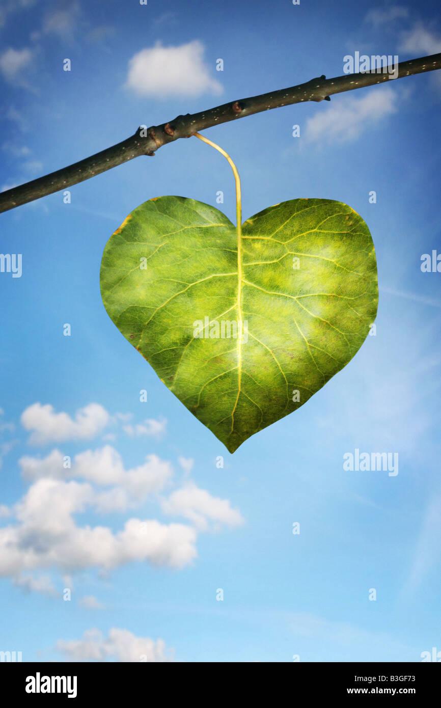 Une feuille en forme de cœur Photo Stock