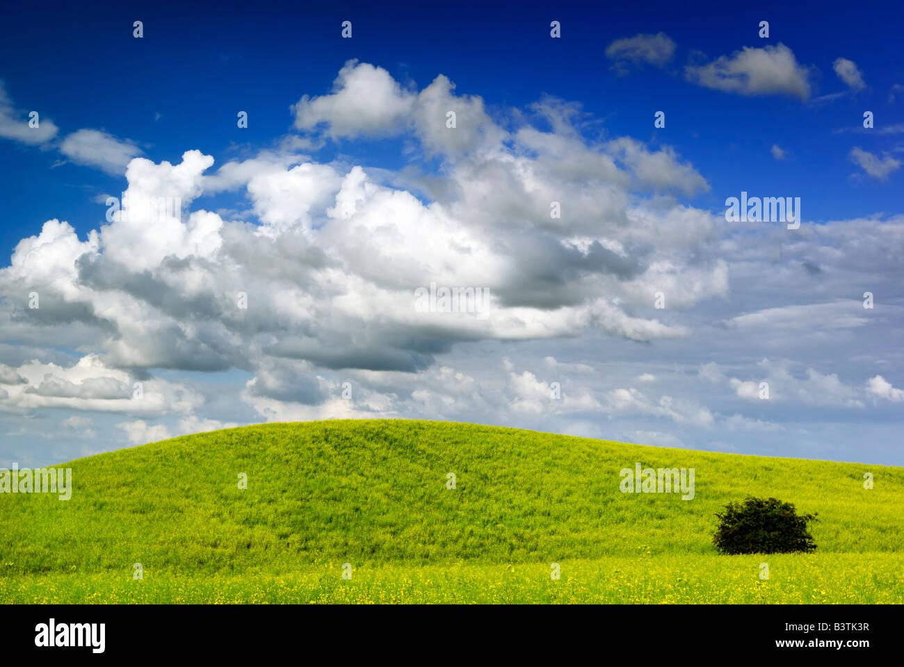 Paysage d'été saturés - vue sur prairie. L'Europe, Pologne. Adobe RGB (1998). Photo Stock