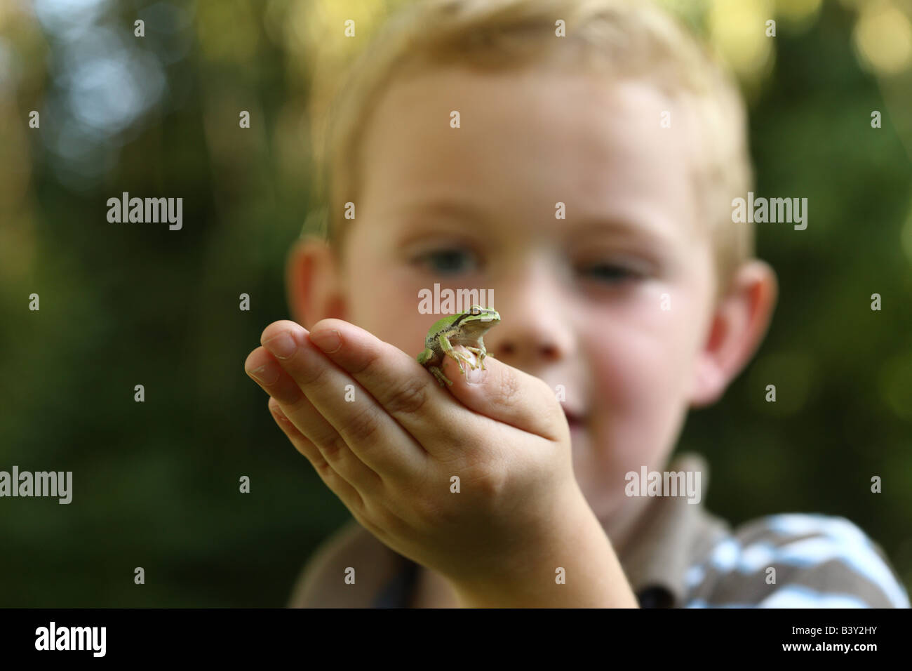 Young boy holding small tree frog Photo Stock