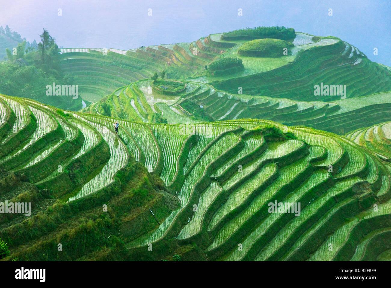 Paysage de rizières en terrasses de Chine Guangxi Longsheng Photo Stock