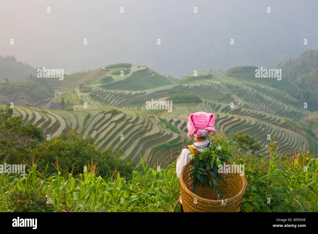 Zhuang girl carrying basket avec des terrasses de riz Chine Guangxi Longsheng Photo Stock