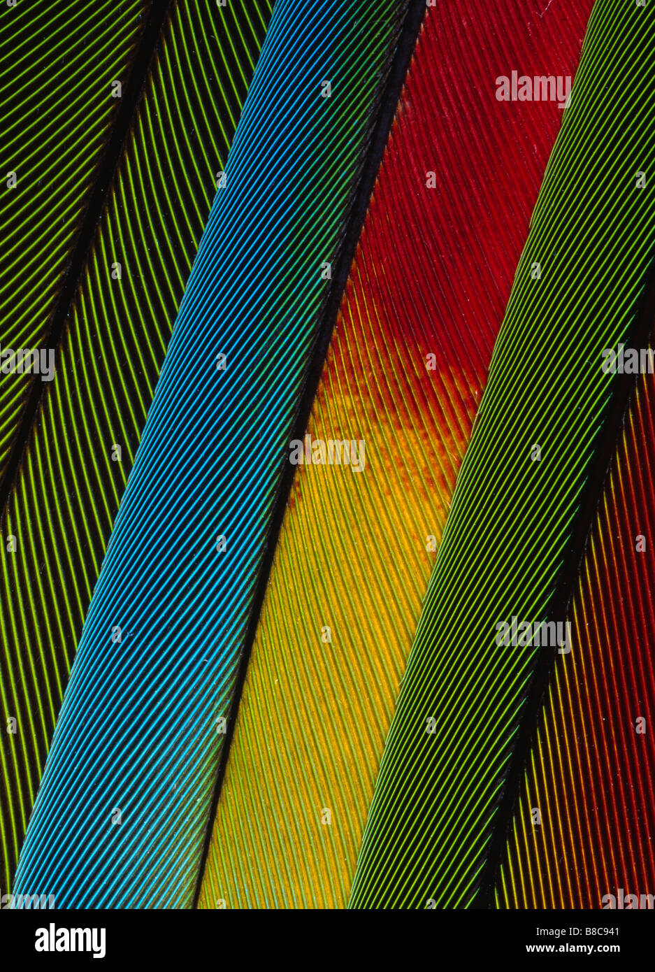 PLUMES DE PERROQUET Photo Stock