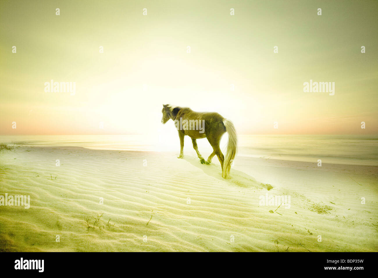 Un poney sur une plage de sable fin Photo Stock