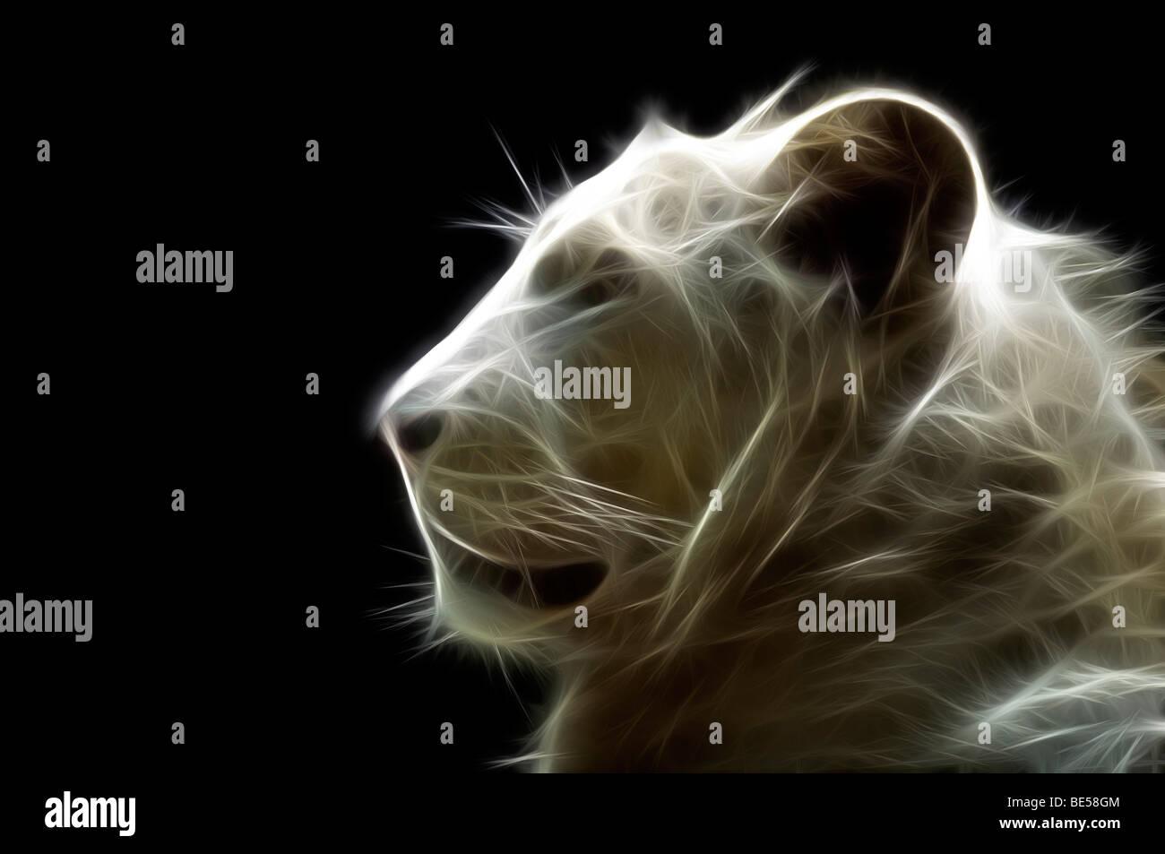 Un chef d'un illustré numériquement white lion (Panthera leo). Portrait d'un lion blanc ( Dessin Photo Stock