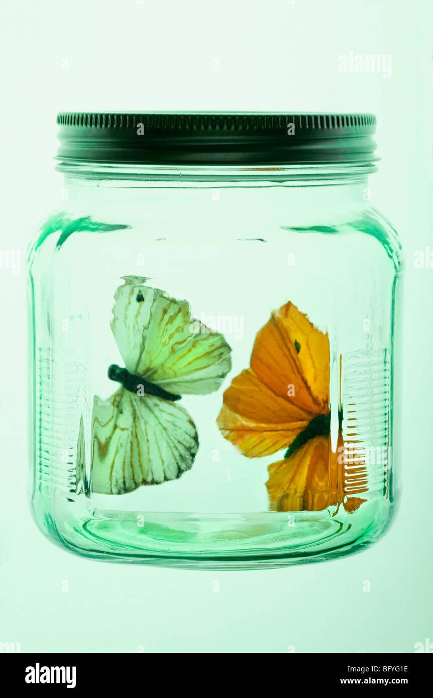 Deux papillons dans un bocal en verre Photo Stock