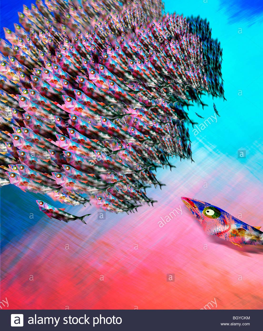 L'École de poissons prédateurs chassant Photo Stock