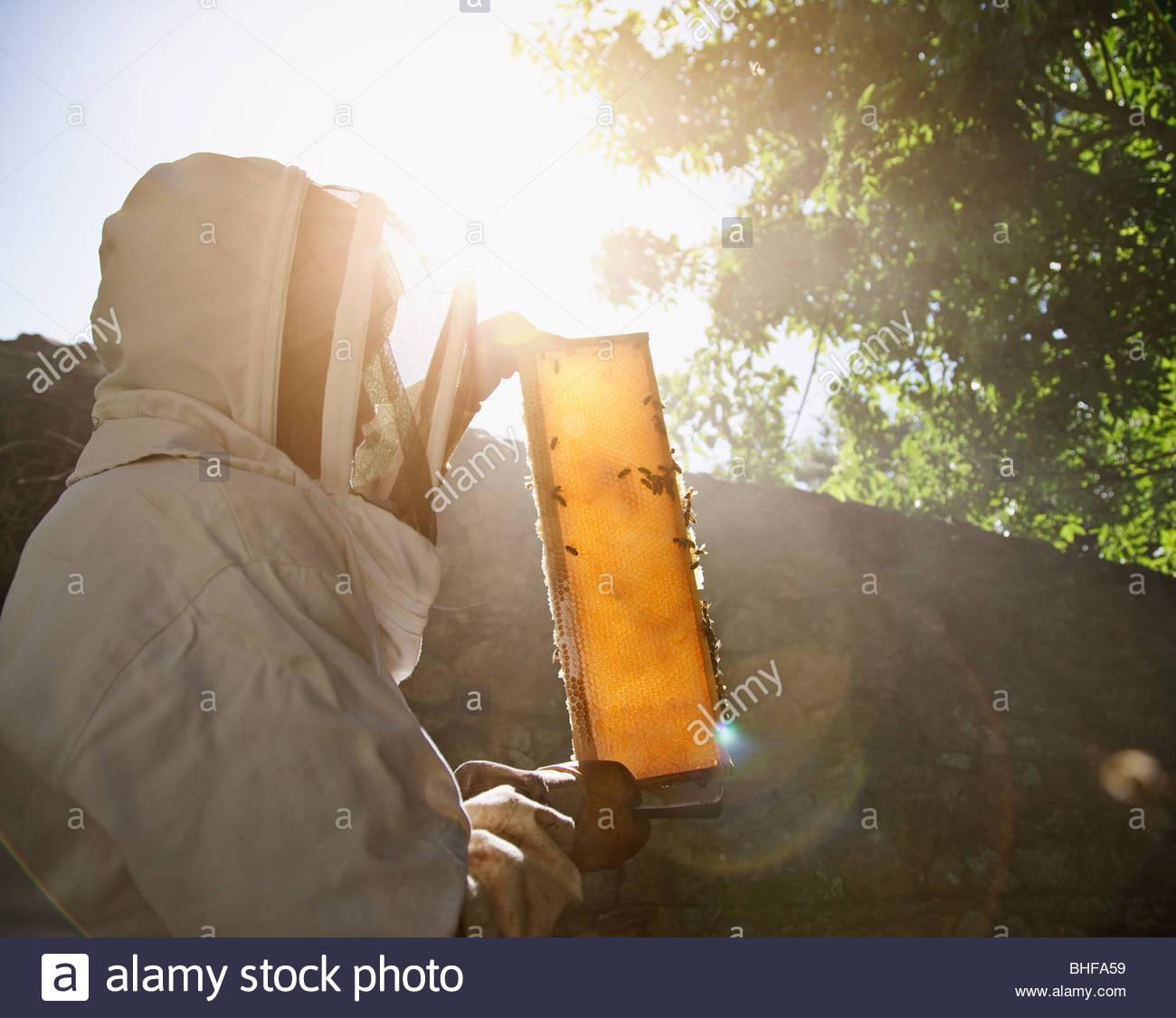 La tenue d'apiculteur les abeilles et miel Photo Stock