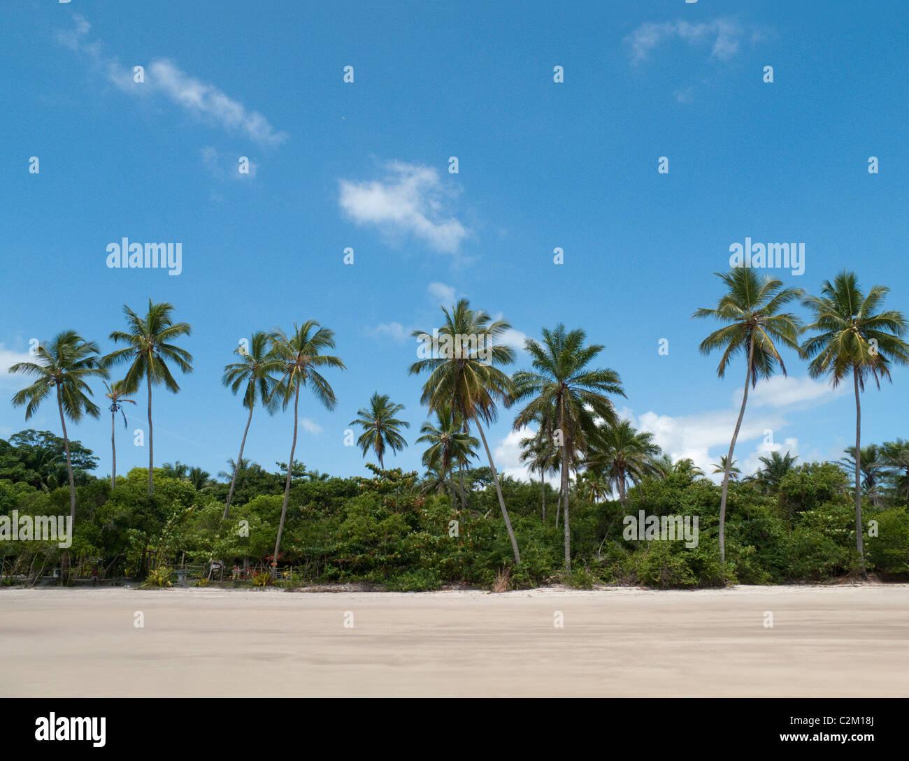 Palmiers sur la plage, l'île de Boipeba, Bahia, Brésil Photo Stock