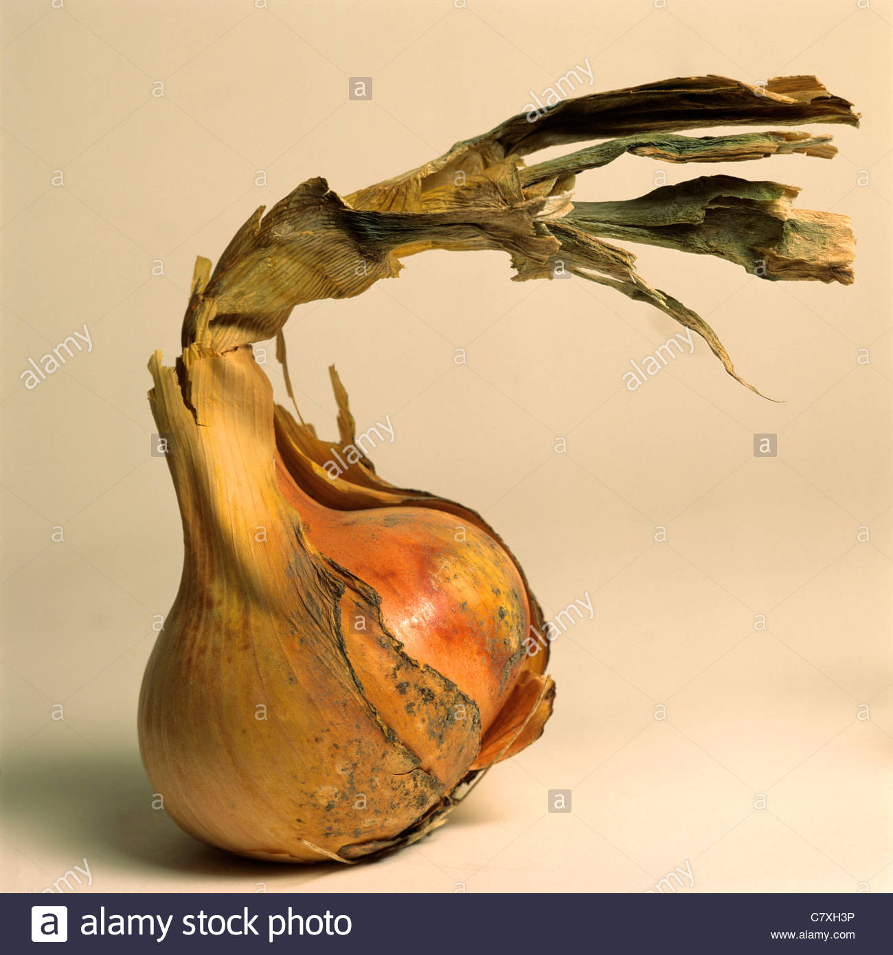 L'oignon avec une desquamation de la peau Photo Stock