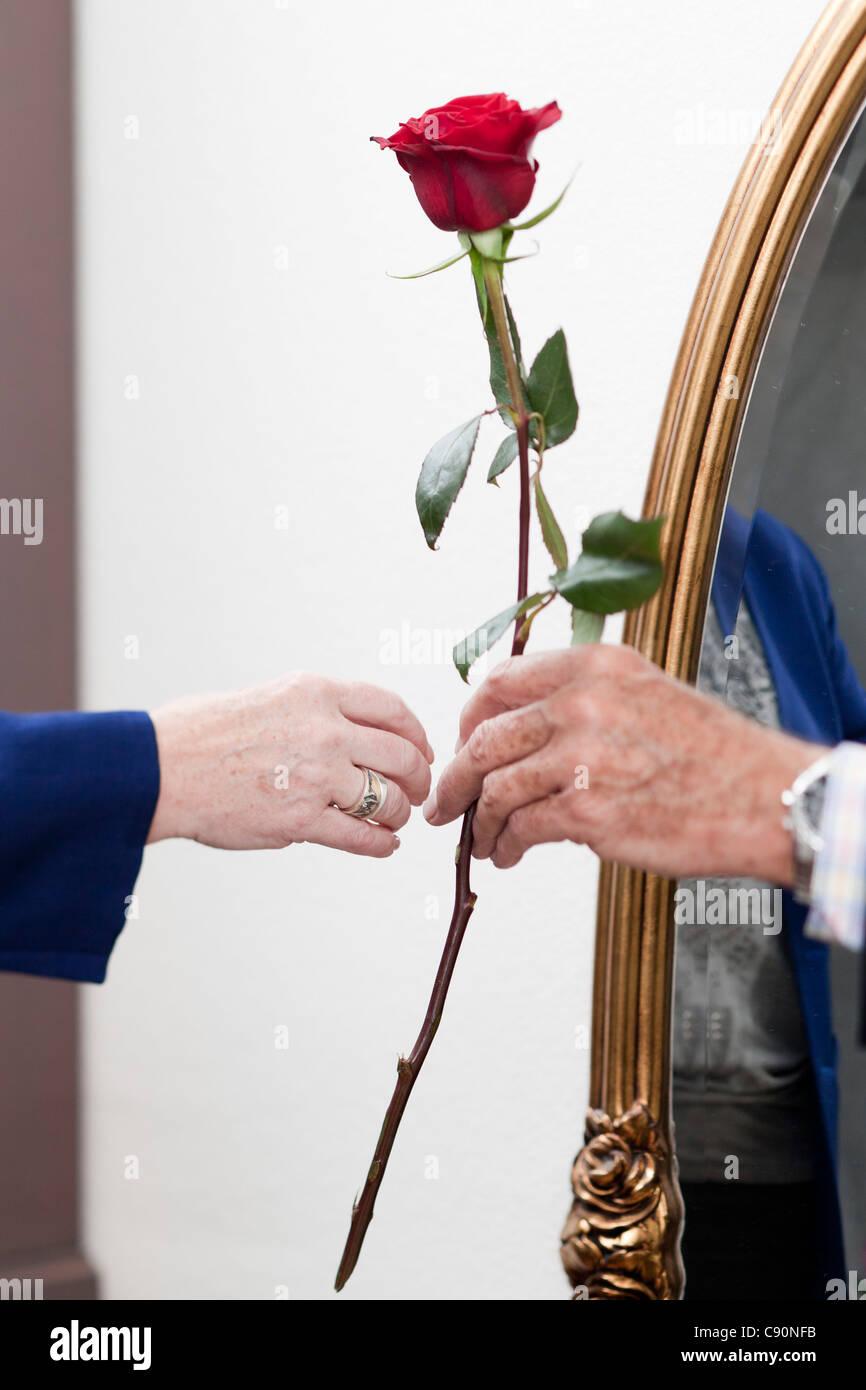 Un vieil homme donne une rose à une vieille femme Photo Stock
