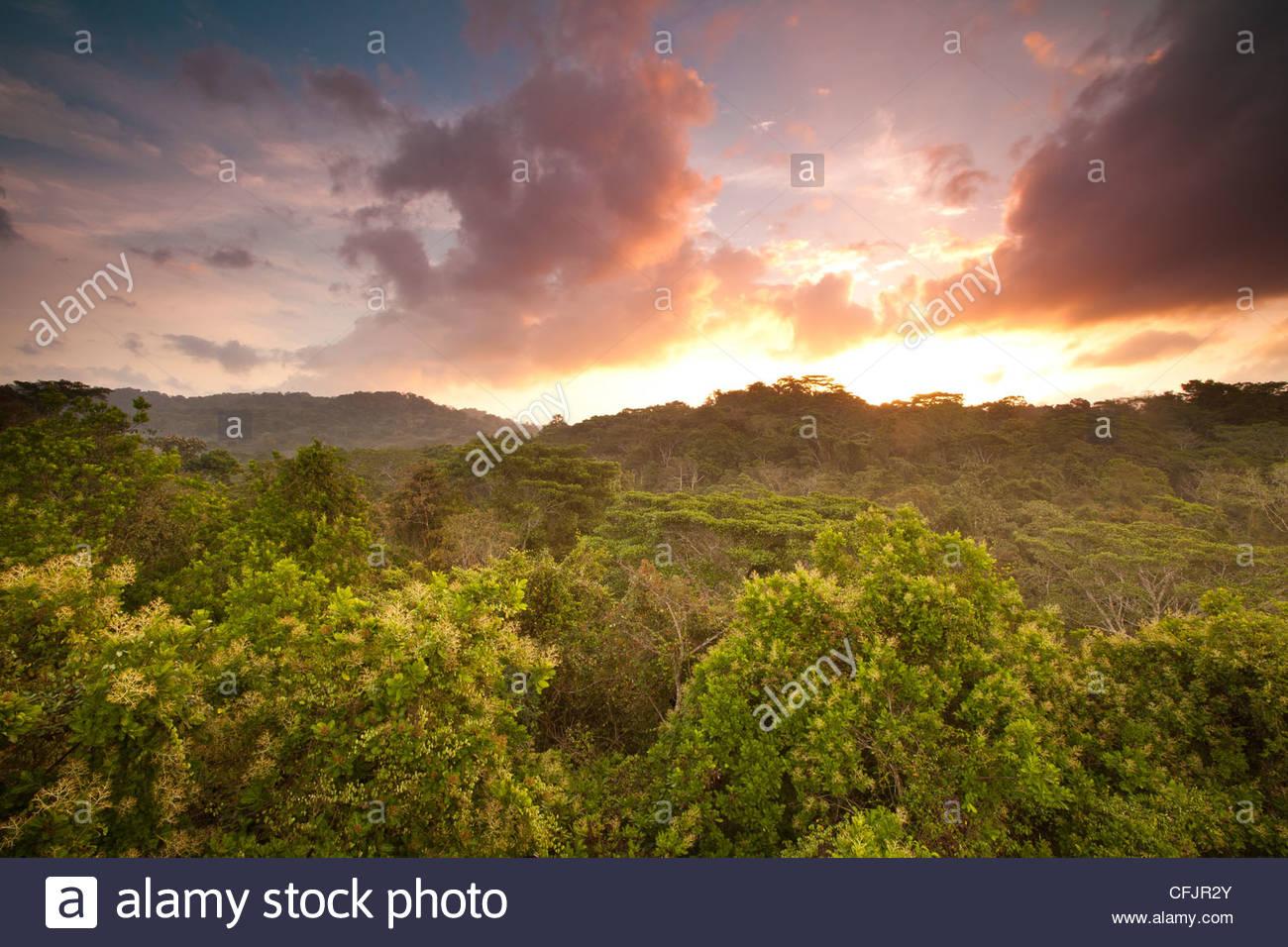 Le lever du soleil dans le parc national de Soberania, République du Panama. Photo Stock