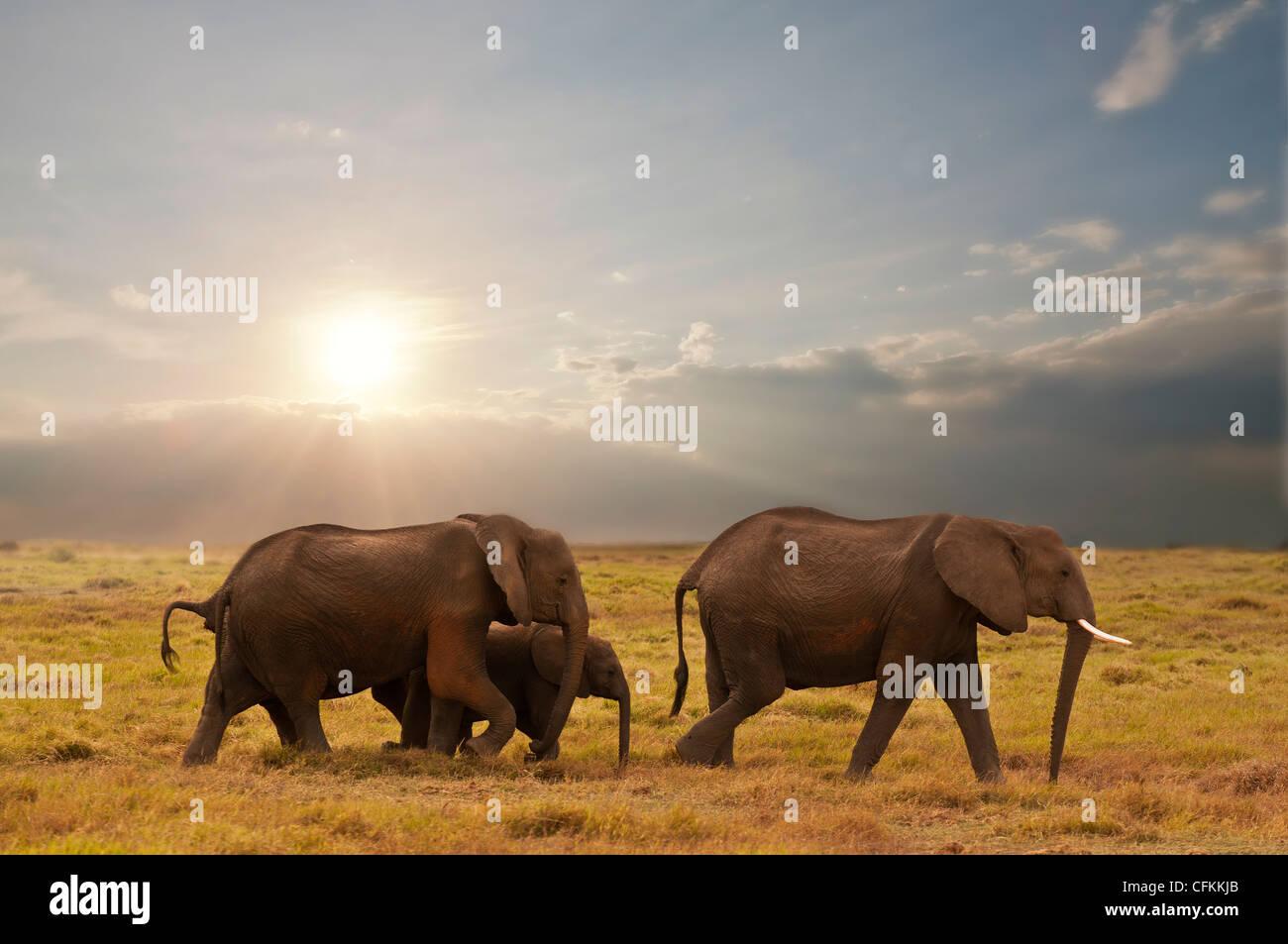 Famille d'éléphants dans le parc national Amboseli, Kenya Photo Stock