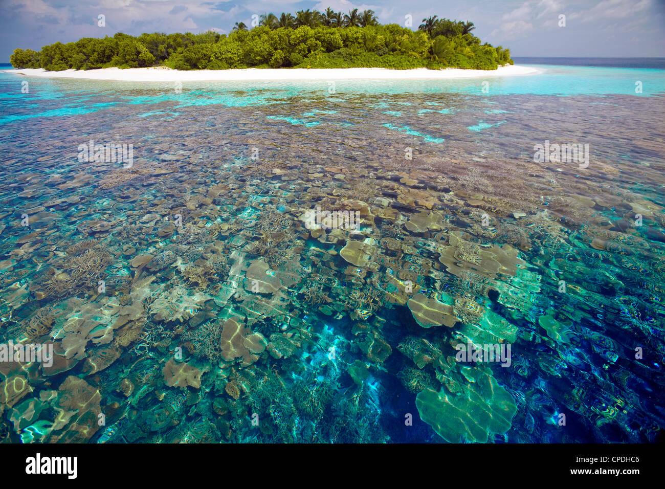 Plaques de corail, le lagon et l'île tropicale, Maldives, océan Indien, Asie Photo Stock