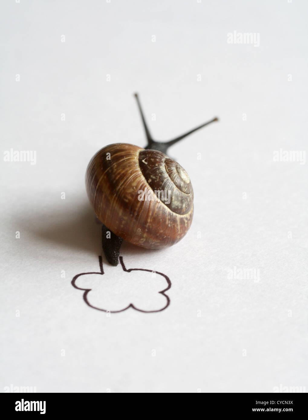 ,Escargot escargot,course d'escargots Photo Stock
