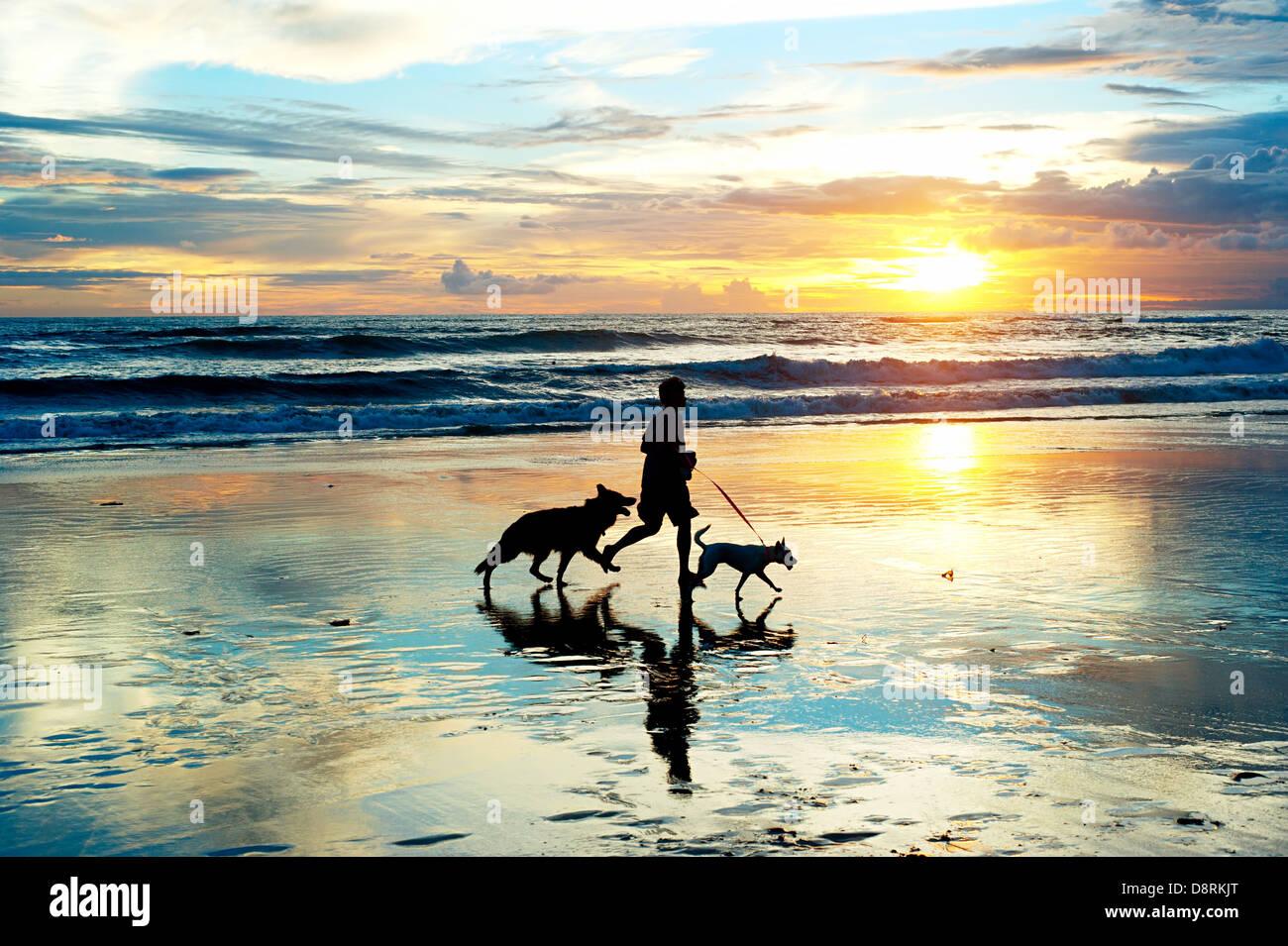 Homme avec un chiens qui courent sur la plage au coucher du soleil. L'île de Bali, Indonésie Photo Stock