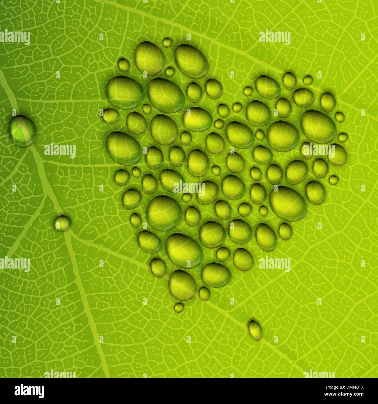 Forme de coeur gouttes de rosée sur feuille verte. Illustration vectorielle, EPS10 Photo Stock