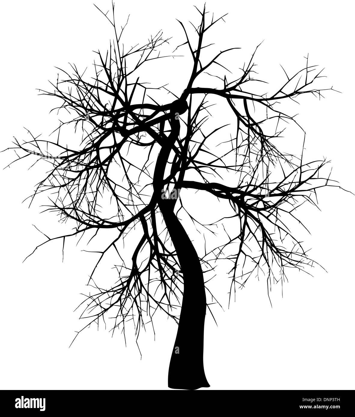Silhouette d'un arbre d'hiver Photo Stock
