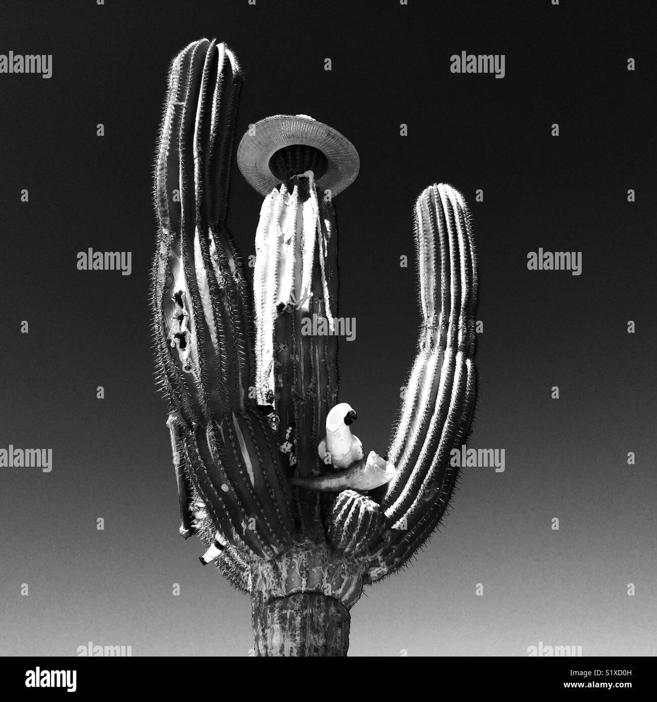Cactus avec additions aléatoires au Mexique Photo Stock