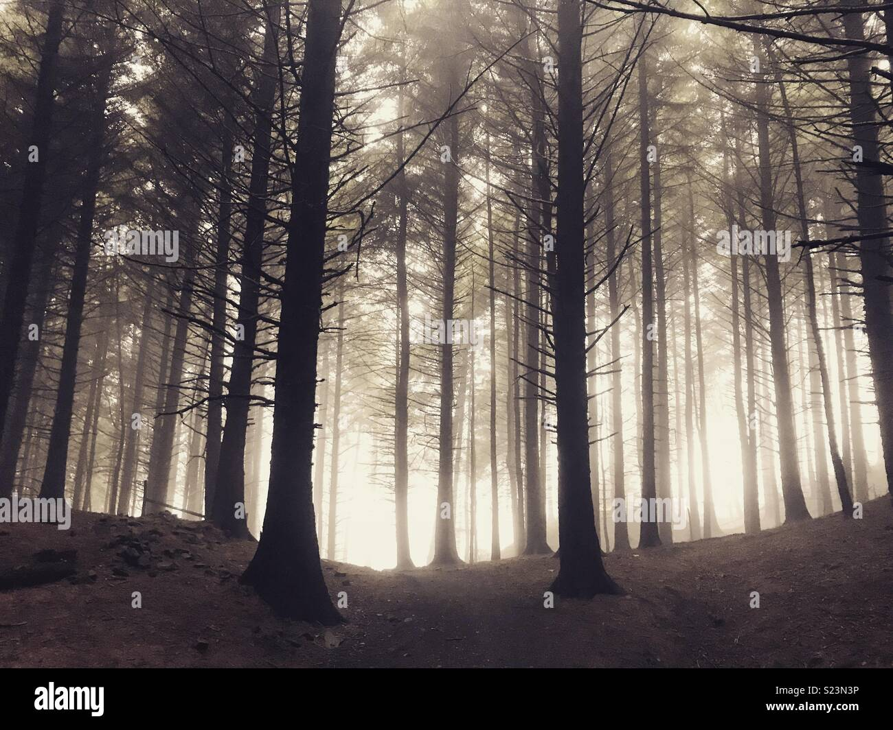 Macclesfield forest Photo Stock