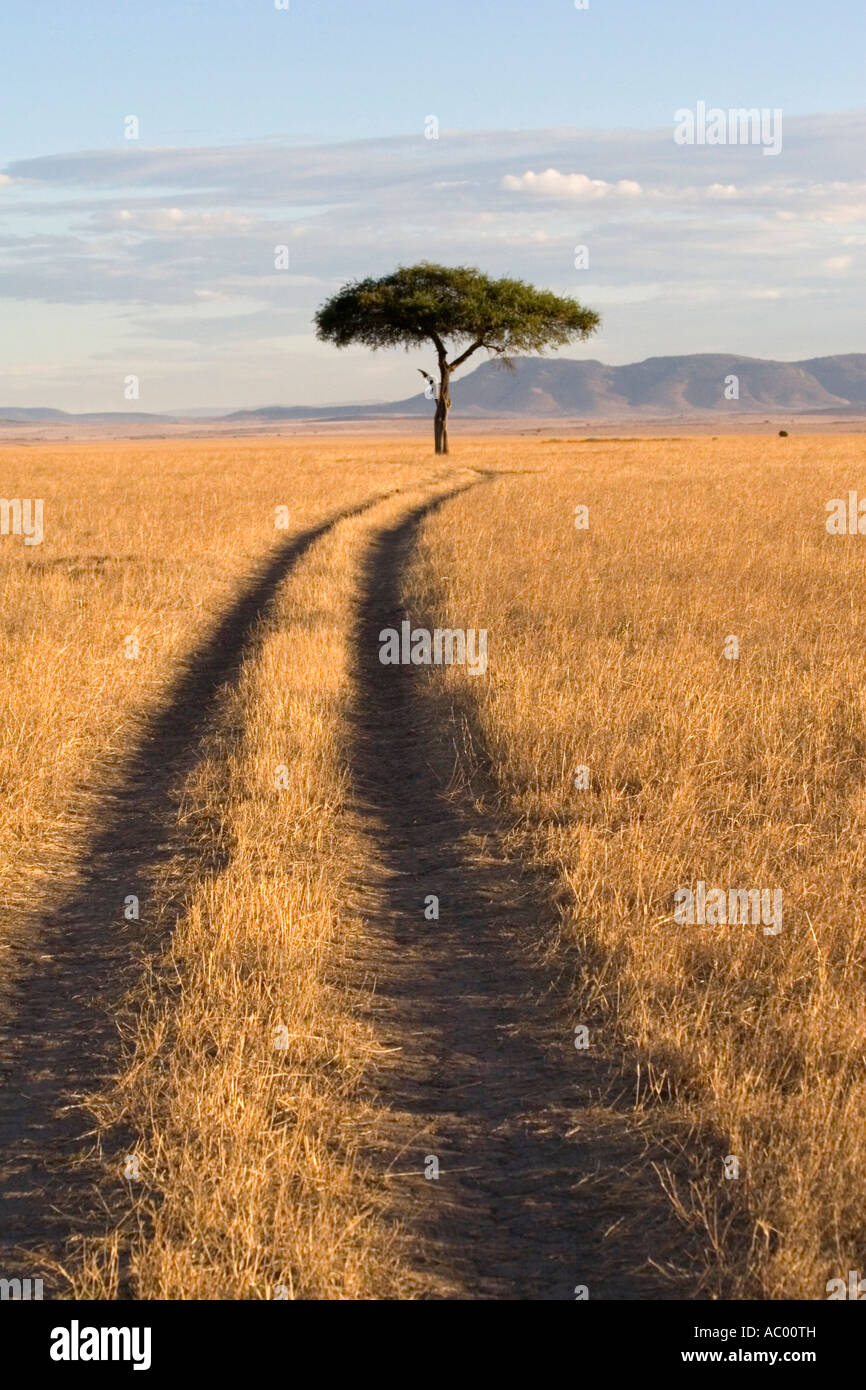 Savana paesaggio Masai Mara Kenya Africa Immagini Stock