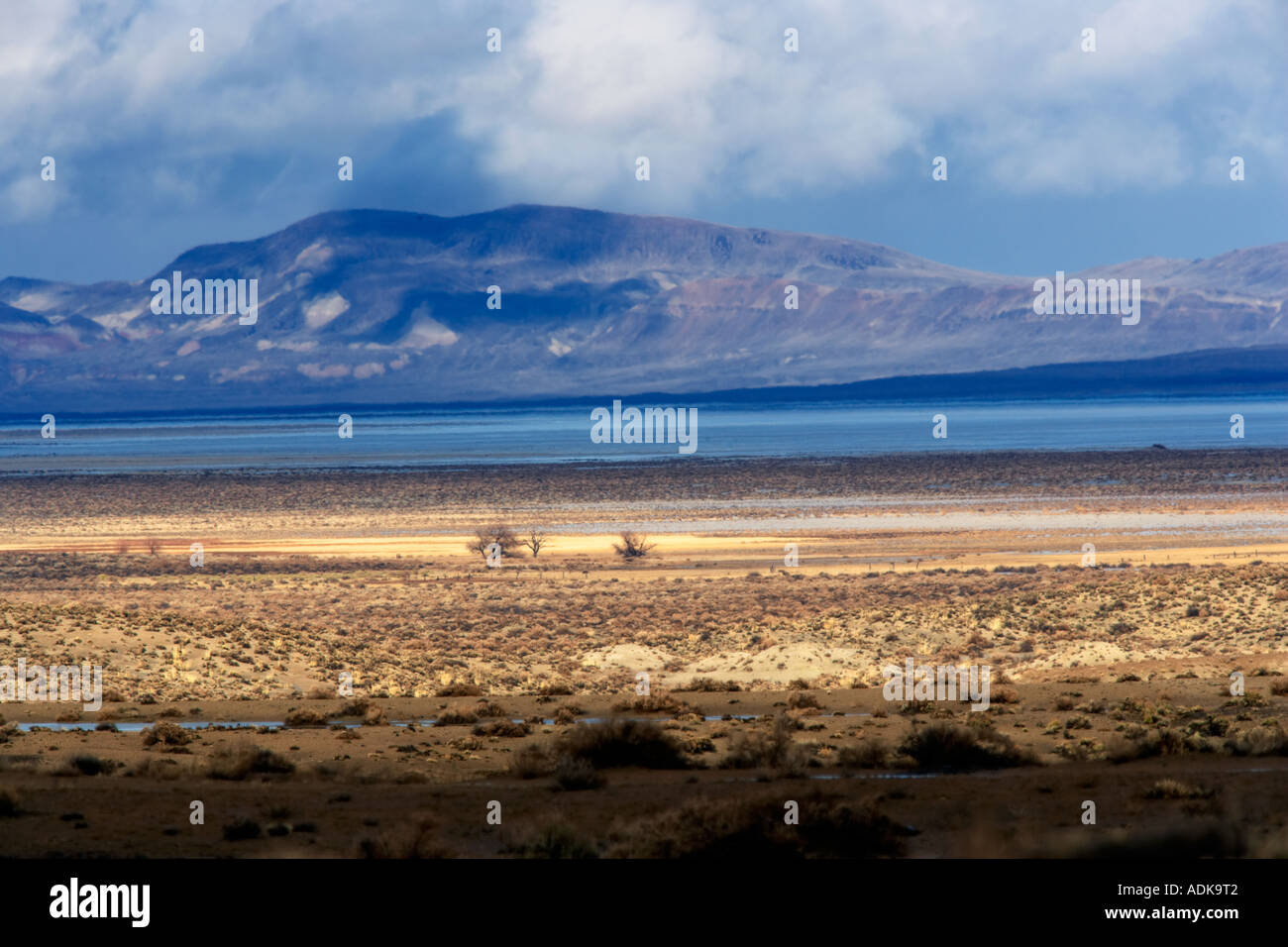 Alberi solitari e tempesta Black Rock Desert National Conservation Area Nevada Immagini Stock