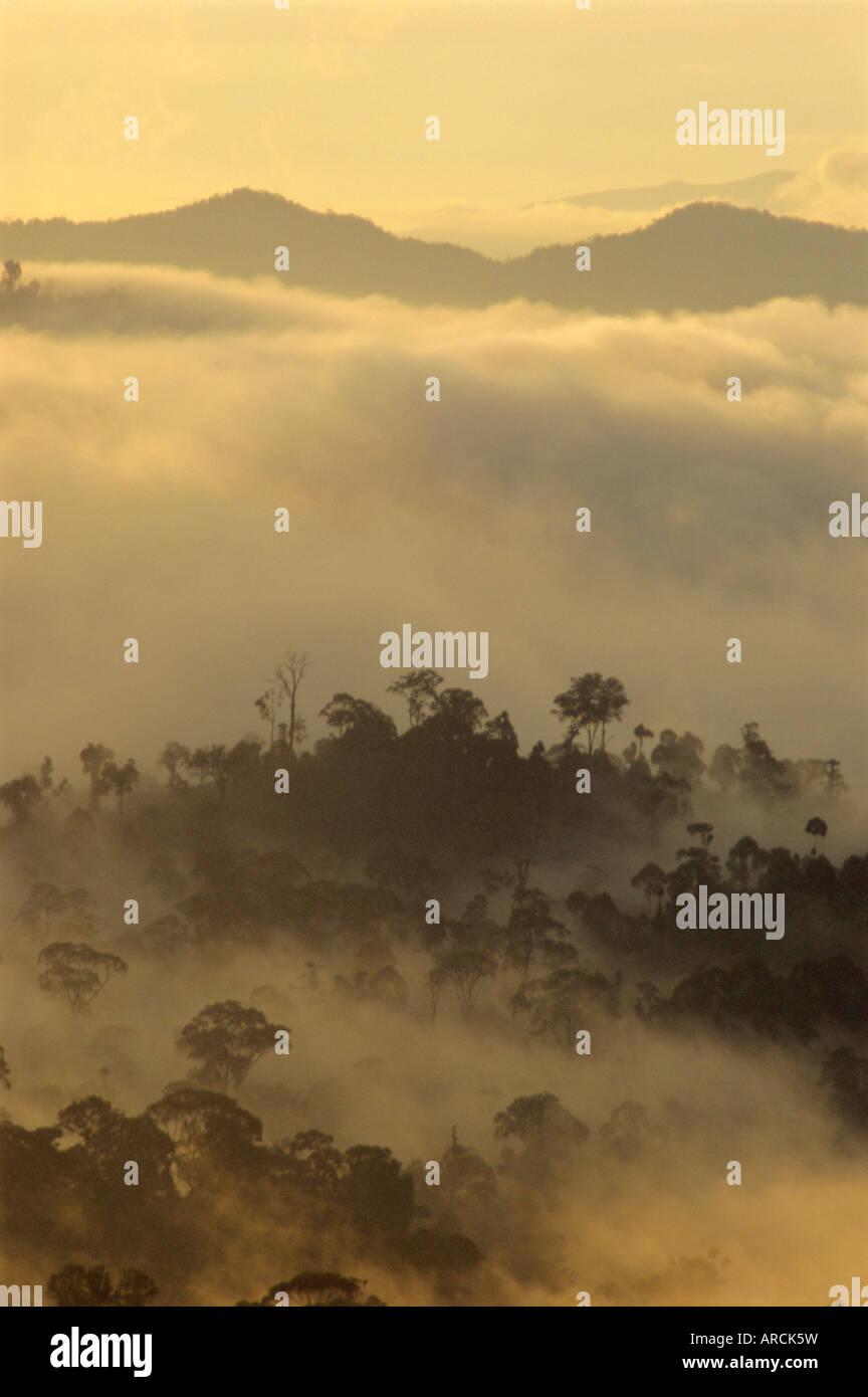 Alba sagome di luce gli alberi della foresta pluviale, Danum Valley, Sabah, isola del Borneo, Malaysia Immagini Stock