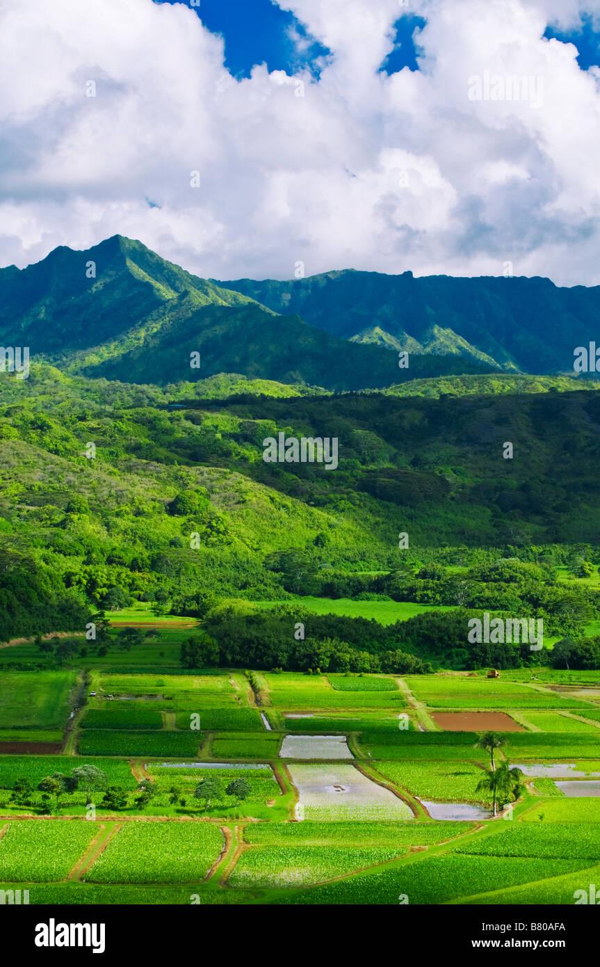 I campi di taro in Valle di Hanalei Isola di Kauai Hawaii Immagini Stock