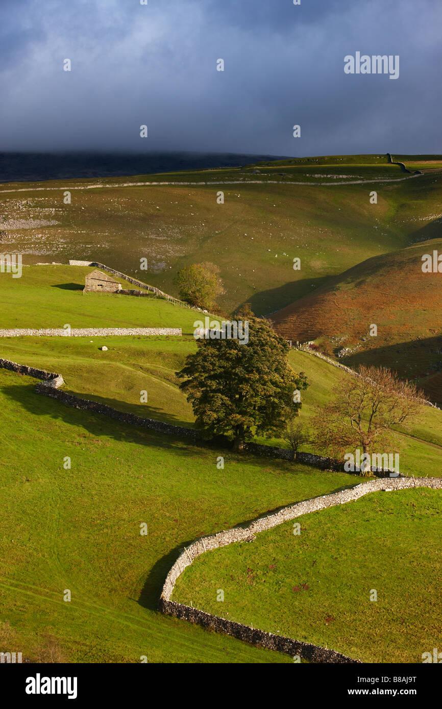 I muri di pietra e fienili nr Kettlewell, Wharfedale, Yorkshire Dales National Park, England, Regno Unito Immagini Stock