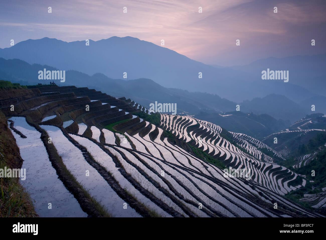 Tramonto a Dragon's Backbone terrazze di riso vicino Yao villaggio di Dazhai, provincia di Guangxi Cina, Immagini Stock