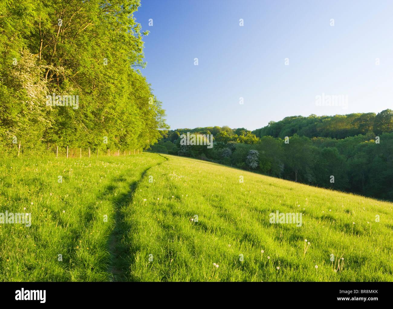 Percorso attraverso il campo, North Downs a Ranmore, vicino a Dorking, Surrey, Regno Unito Immagini Stock