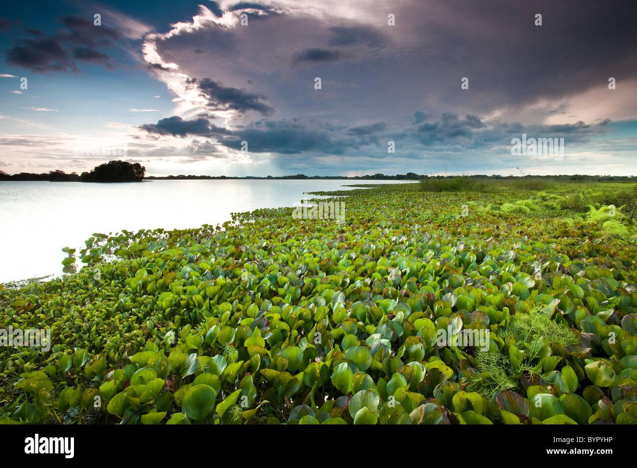 A Lago di Refugio de vida Silvestre Cienaga de las Macanas Riserva, in Herrera provincia, Repubblica di Panama. Immagini Stock