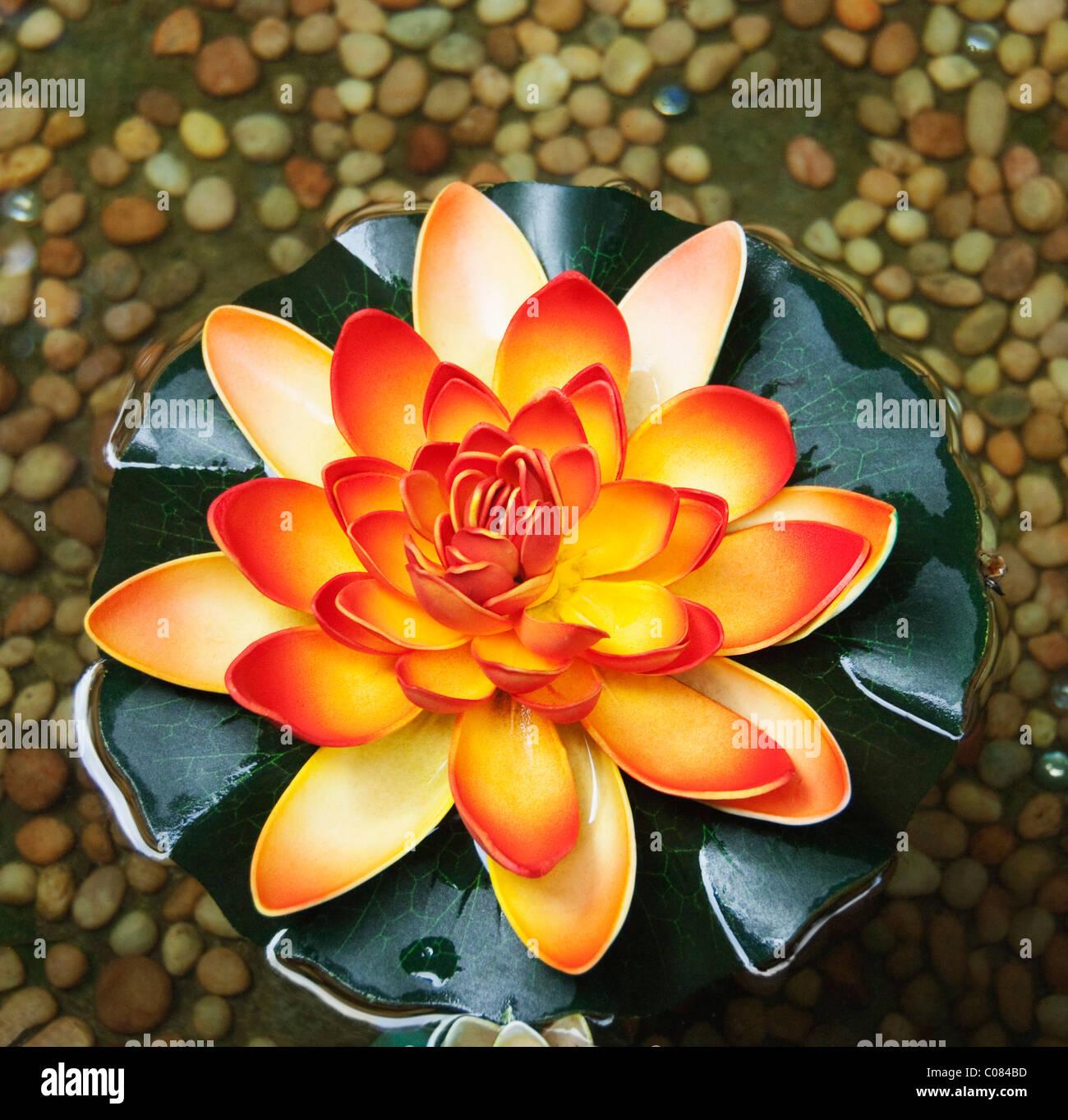 Angolo di alta vista di un fiore di loto, Tirupati, Andhra Pradesh, India Immagini Stock