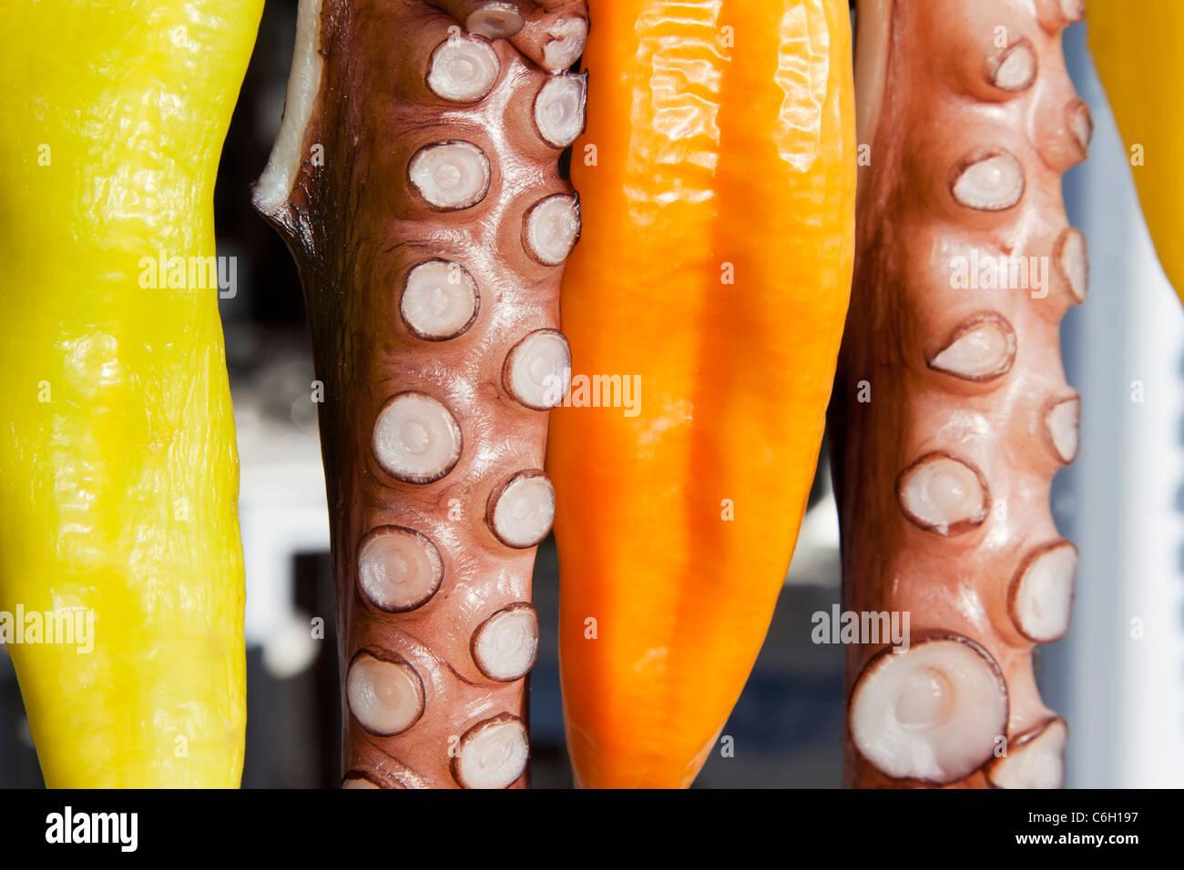 Il polpo (ohtapodi) essiccazione al di fuori di un ristorante nel centro di Fira, Santorini (Thira), Isole Cicladi, Immagini Stock