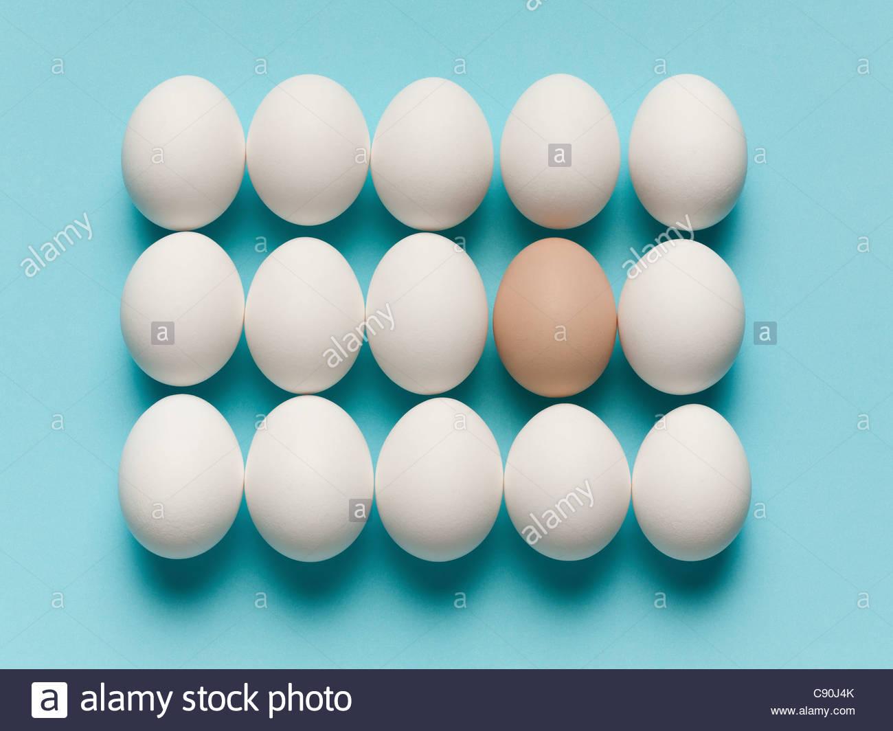 Uovo marrone con grandi le uova bianche Immagini Stock