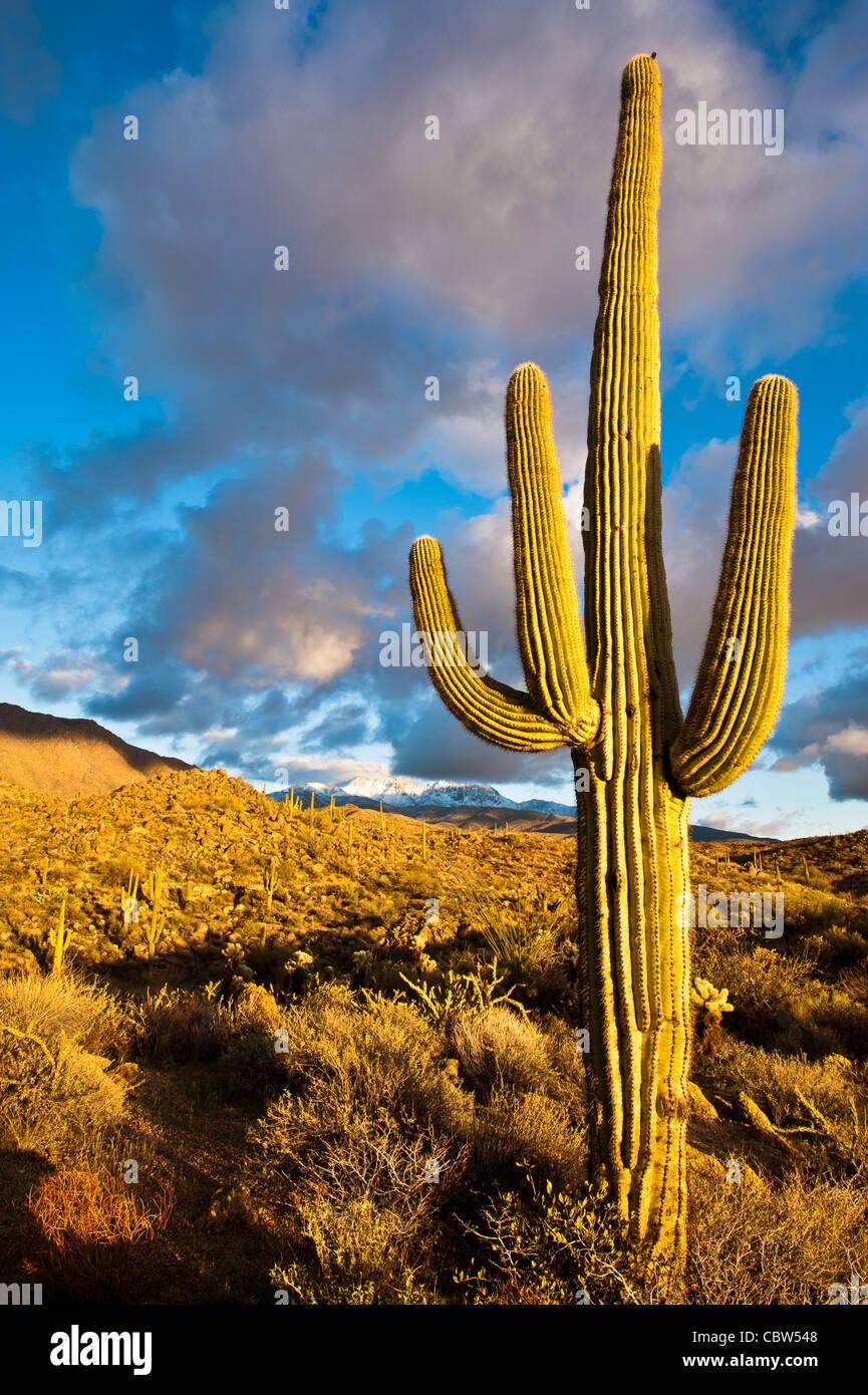 Quattro picchi (Yavapai: Wikopa, a 7657 piedi (2335 m) in altitudine, è un prominente punto di riferimento Immagini Stock