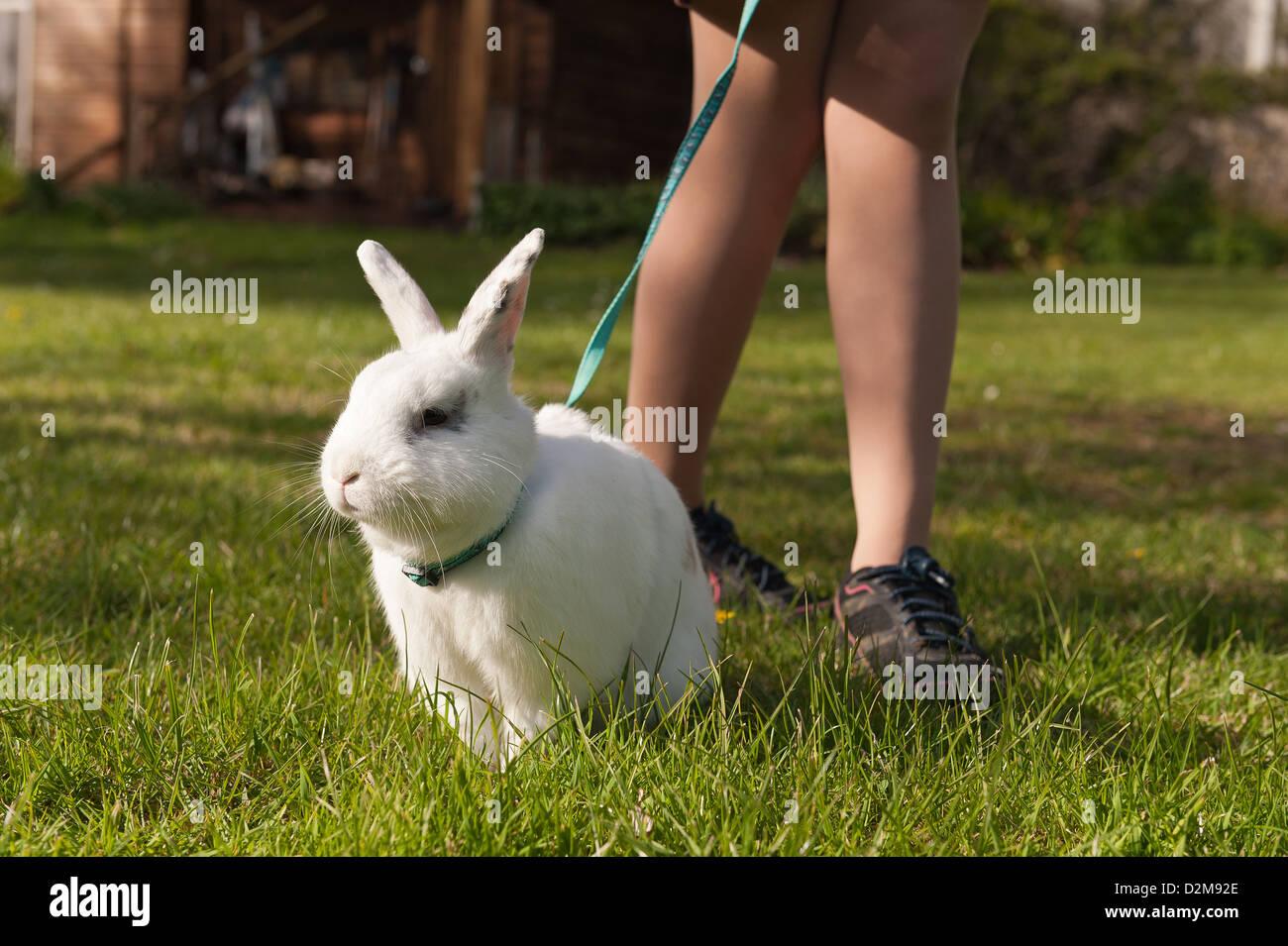 Adolescente ragazza camminare un inglese butterfly coniglio bianco su una derivazione su un prato con margherite Immagini Stock