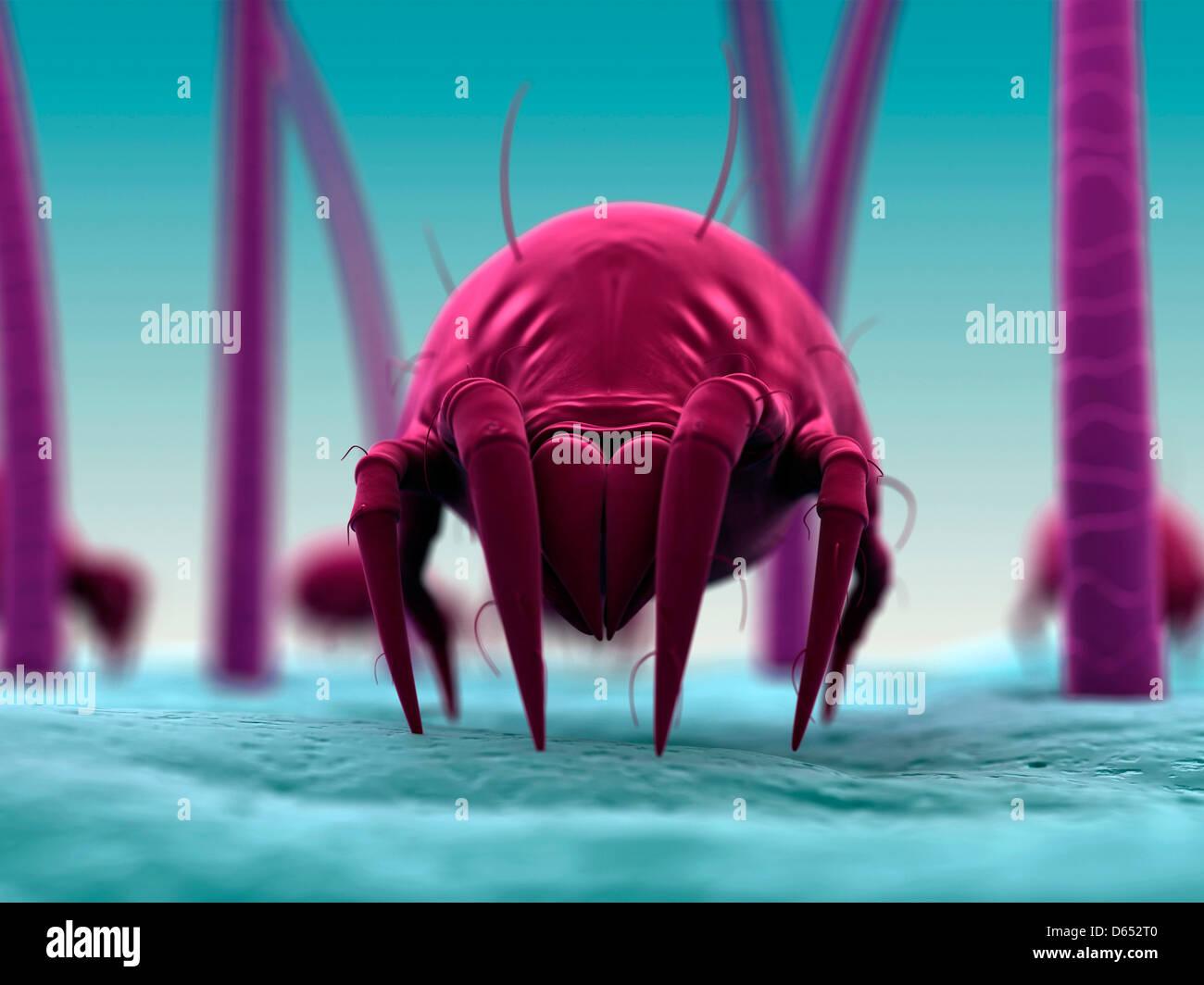Acaro della polvere, artwork Immagini Stock