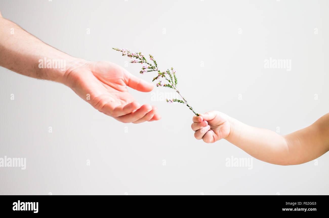 Bambino consegna fiori per un adulto Immagini Stock