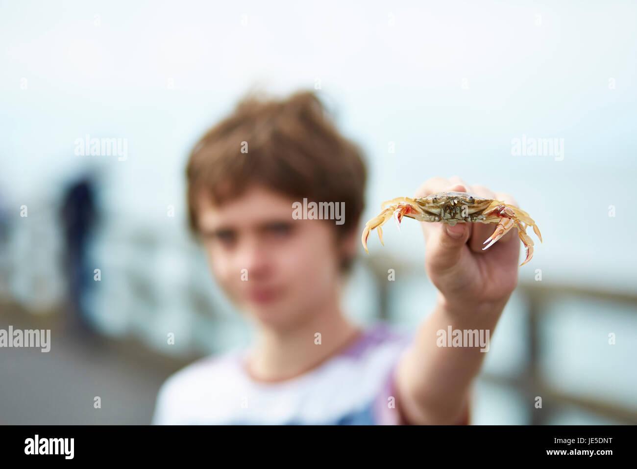Ragazzo (11) tenendo fuori un granchio Immagini Stock