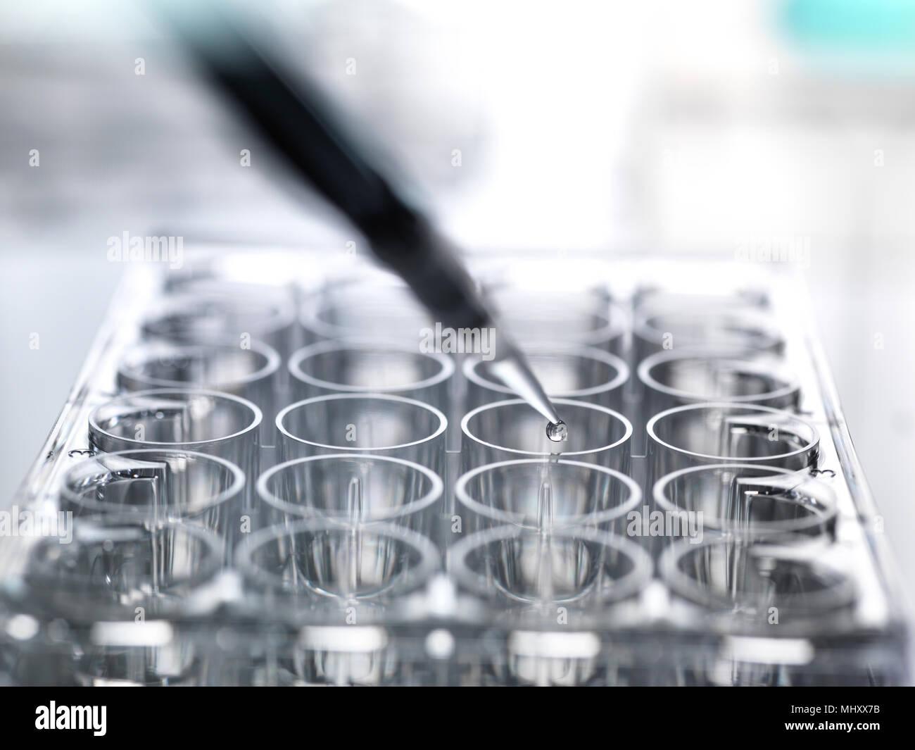 Scienziato il pipettaggio di campione in un multi pozzetto della piastra durante un esperimento di laboratorio Immagini Stock