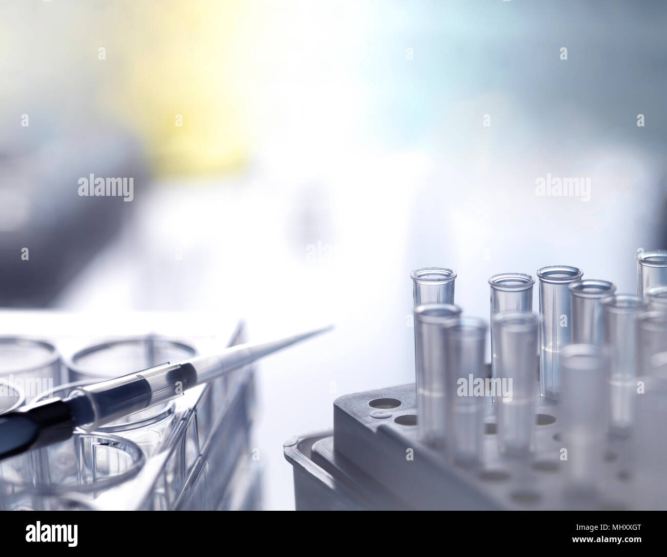 Pipetta a più pozzetti con le punte della pipetta durante un esperimento di laboratorio, close-up Immagini Stock