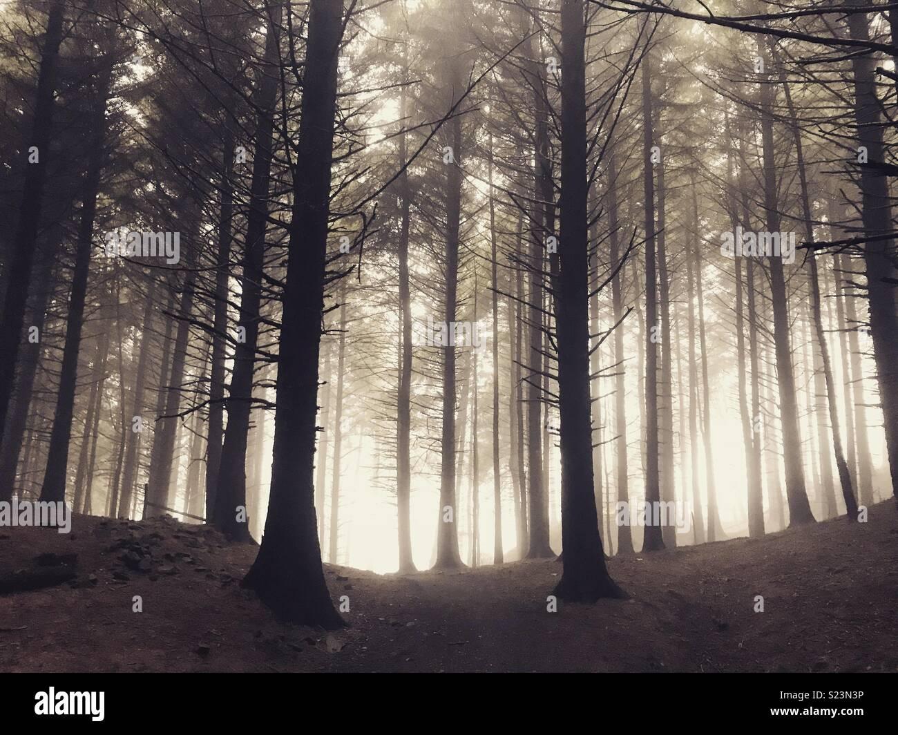Macclesfield forest Immagini Stock