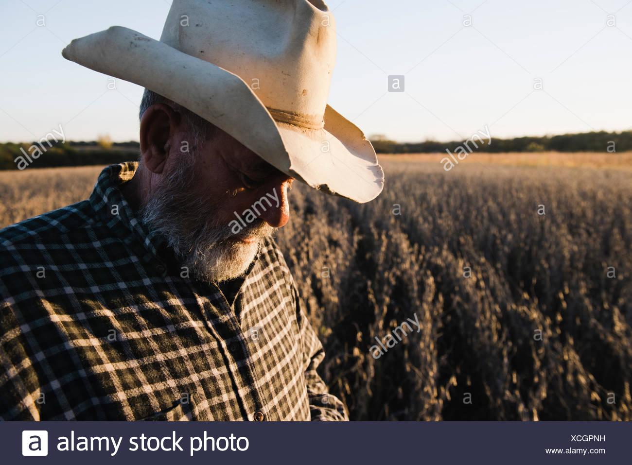 Maschio anziano contadino che guarda il raccolto di soia, Plattsburg, Missouri, Stati Uniti d'America Immagini Stock