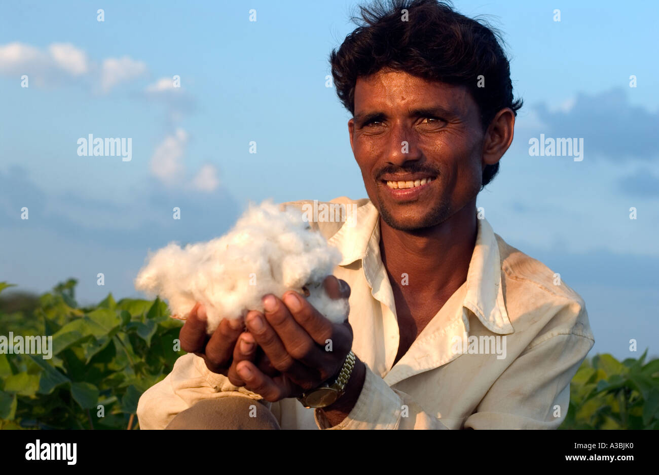 Agricultor em Guajarat Índia cresce o algodão que ele vende sob o regime de Fairtrade Marks and Spencer Imagens de Stock