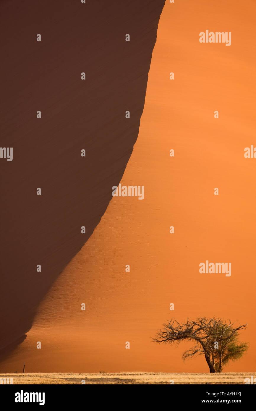 Árvore em frente da praia de dunas de areia, o Deserto do Namibe, Namíbia, África do Sul Imagens de Stock